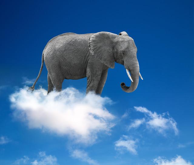O Dia dos Elefantes